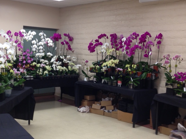 South Bay Orchid Society Show And Sale Information
